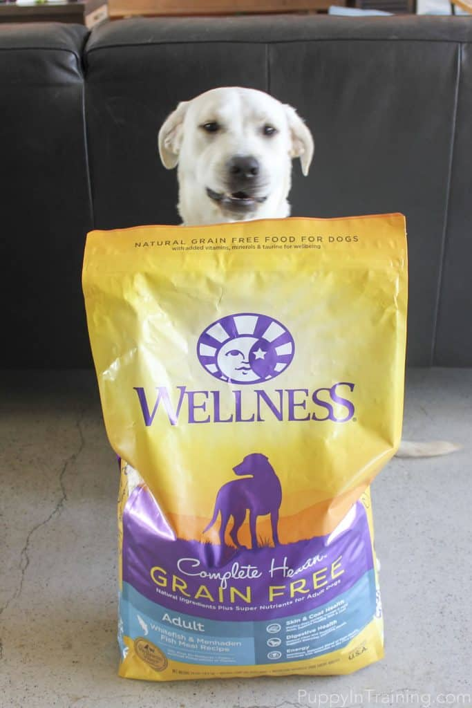 Wellness Grain Free Dog Food