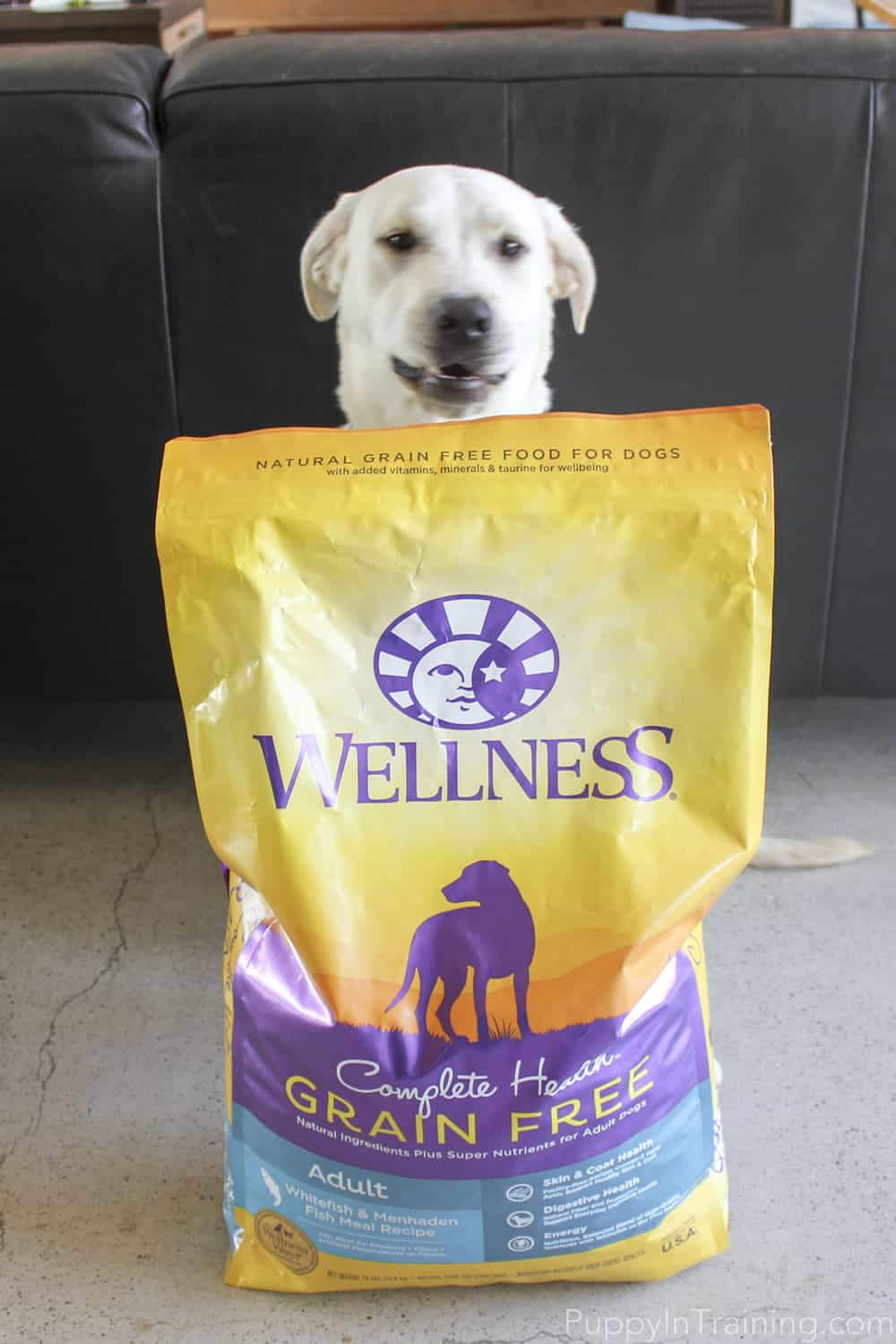 Wellness Dog Food How Much To Feed