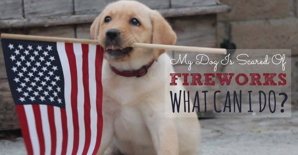 My Dog Is Scared Of Fireworks What Can I Do? - Puppy In Training