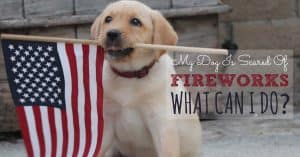 My dog is scared of fireworks what can i do?