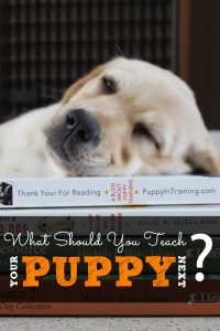 What should you teach your puppy next?