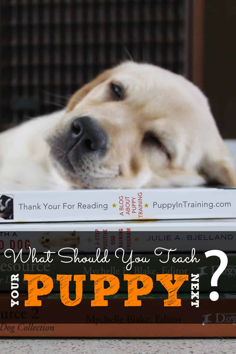 What Should You Teach Your Puppy Next? 14 Fun Classes For You And Your Pup!