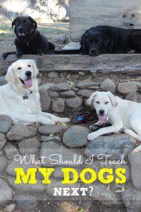 What should I teach my dogs next? My dog training class list