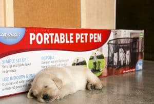 Puppy playpen or not. Photo shoots are tiring!
