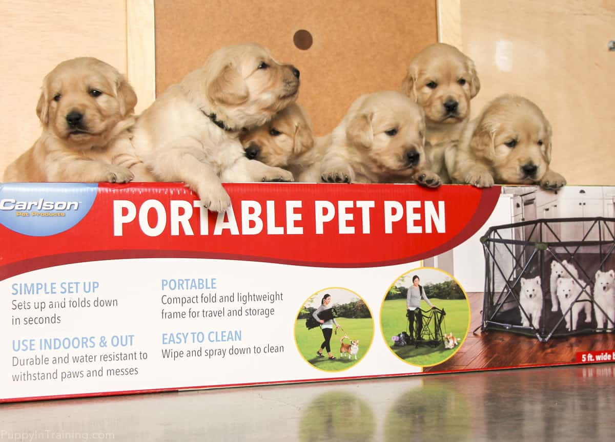 Carlson Portable Pet Pen Review: First Look At Our New Puppy Playpen