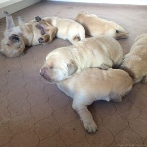 The Puppy Pile!