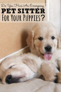 Do You Have An Emergency Pet Sitter?