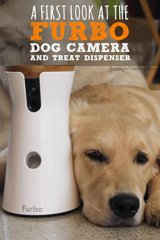 Interactive Dog Camera And Treat Dispenser