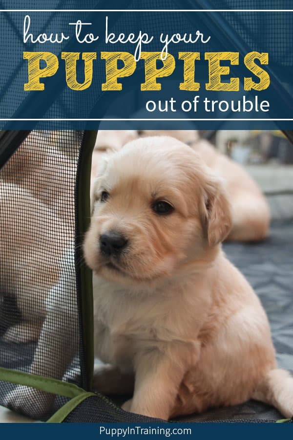 Puppy peeking out the door of his Carlson Portable Pet Pen.
