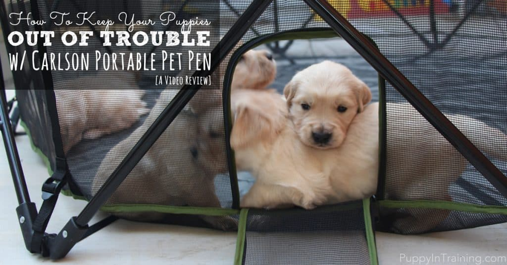 Carlson Portable Pet Pen Video Review