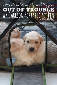 How to keep your puppies out of trouble with the Carlson Portable Pet Pen