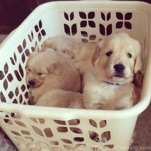 Doing laundry with the puppies