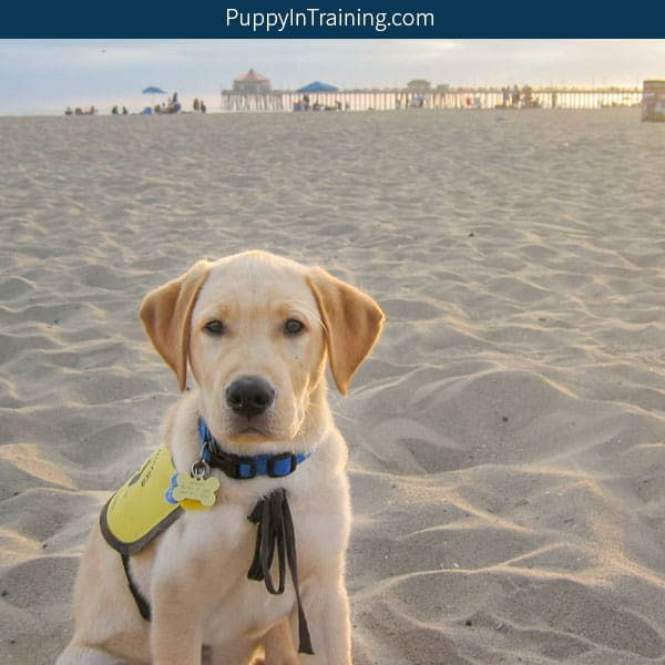 How much does a Guide Dog cost?
