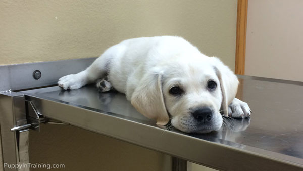 Ongoing puppy costs can be expensive. Especially considering vet bills and lifetime cost.