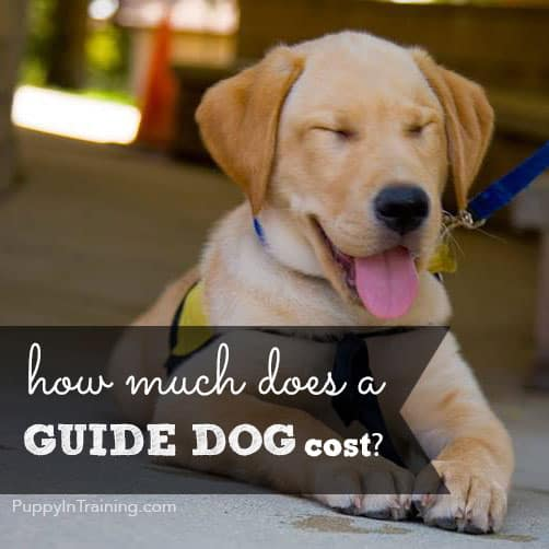How Much It Cost To Put A Dog Down