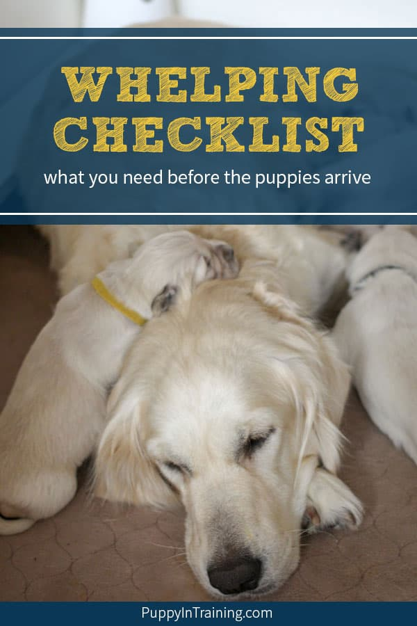 Whelping Checklist - Raven with her Golden Retriever puppies lying on her head