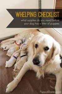 What supplies do you need for whelping a litter of puppies?