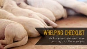 Whelping Supply Checklist