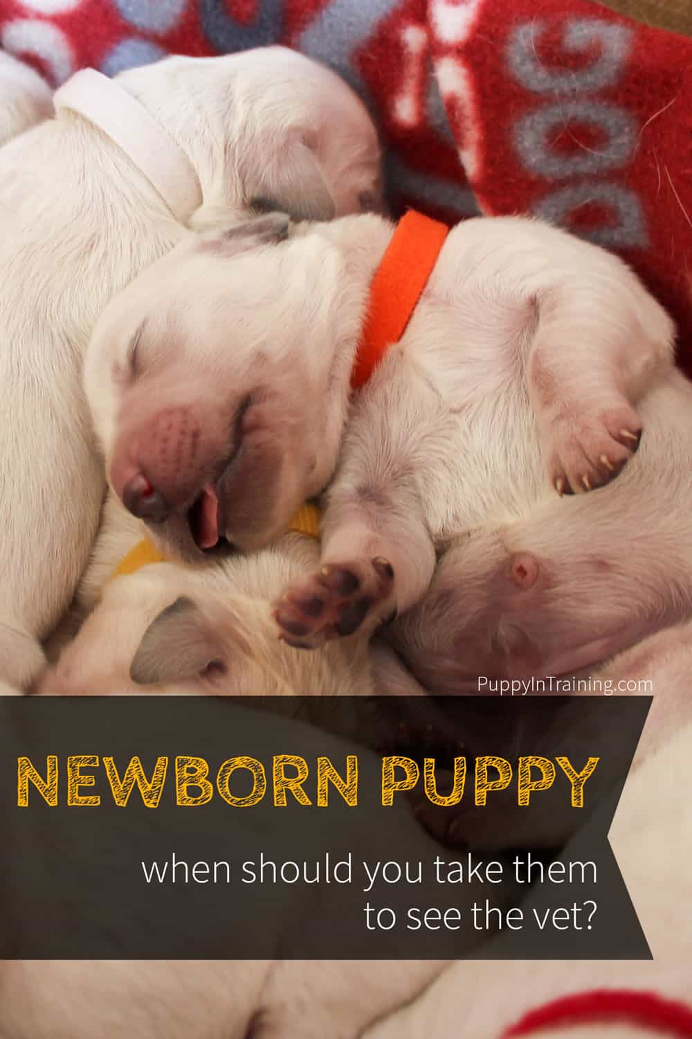 newborn puppy - when should you take them to see the vet?