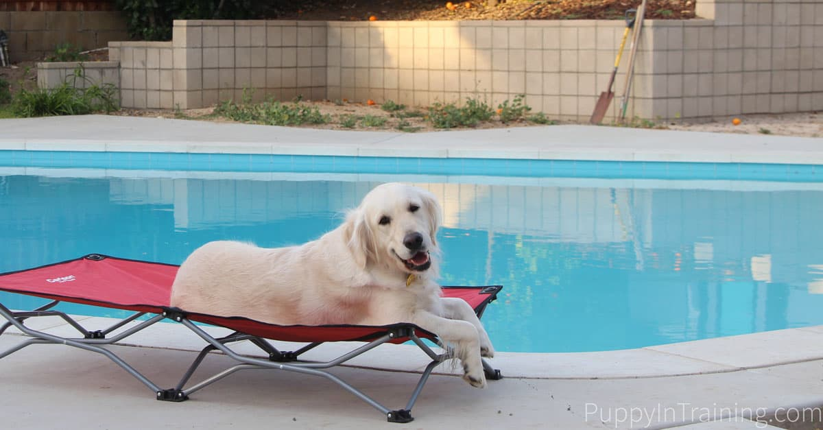 Carlson Portable Dog Bed Poolside. Raven reviews this portable doggy bed.