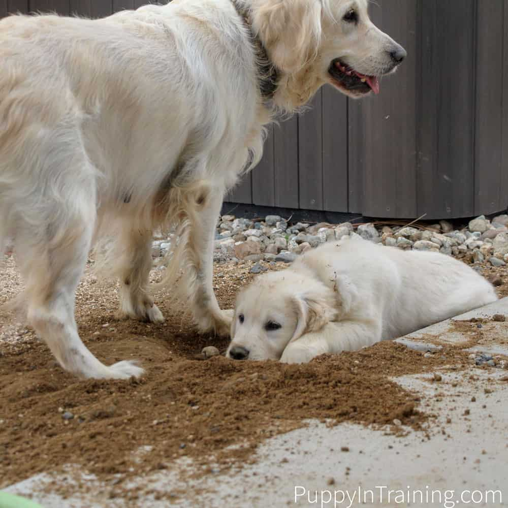 Puppy Problems? What issues are you having with your puppy?