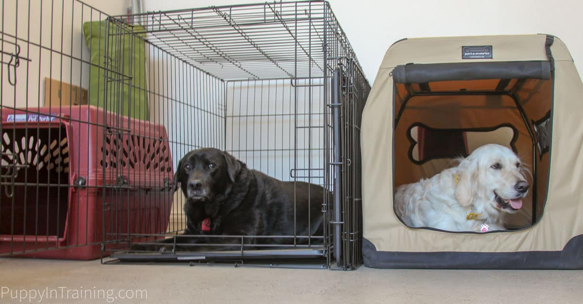 Which crate is best for your puppy? Stetson and Raven test travel, plastic, and wire crates.