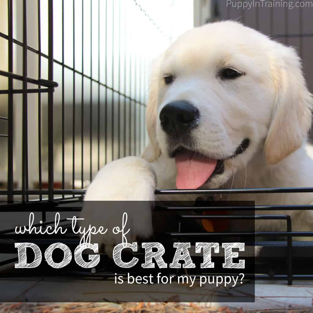 Which dog crate is best for my puppy?