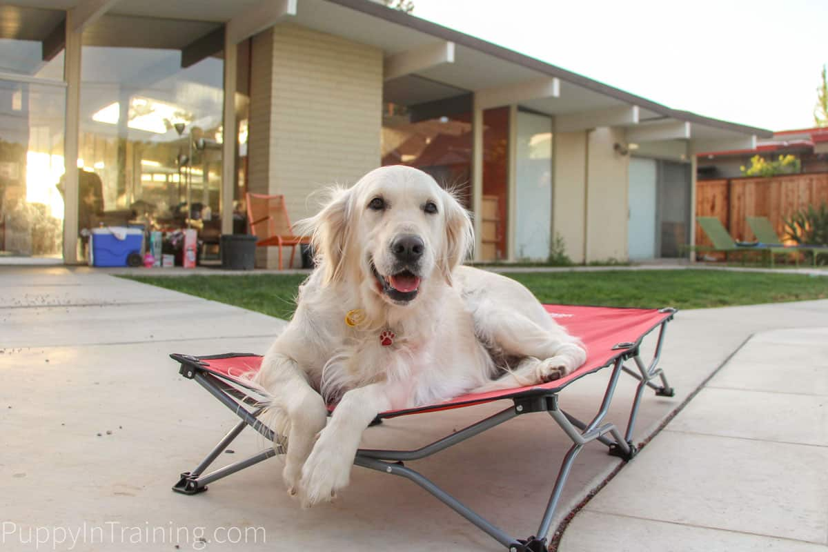 I'm hoping to see some cool new products at SuperZoo 2018 like our Carlson Portable Dog Cot.