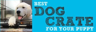 Best Dog Crate For Puppies