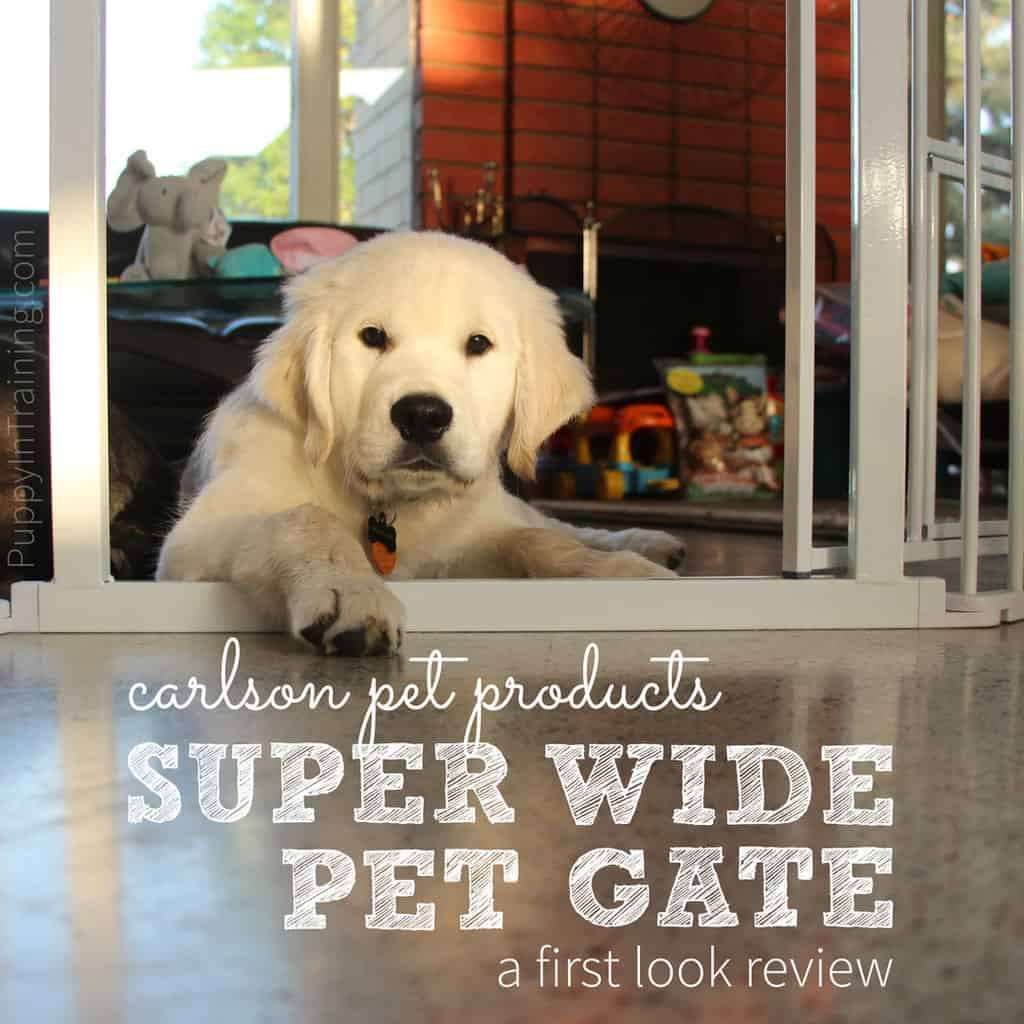 Carlson Super Wide Pet Gate Review. Our Golden puppy, Charlie's first look.