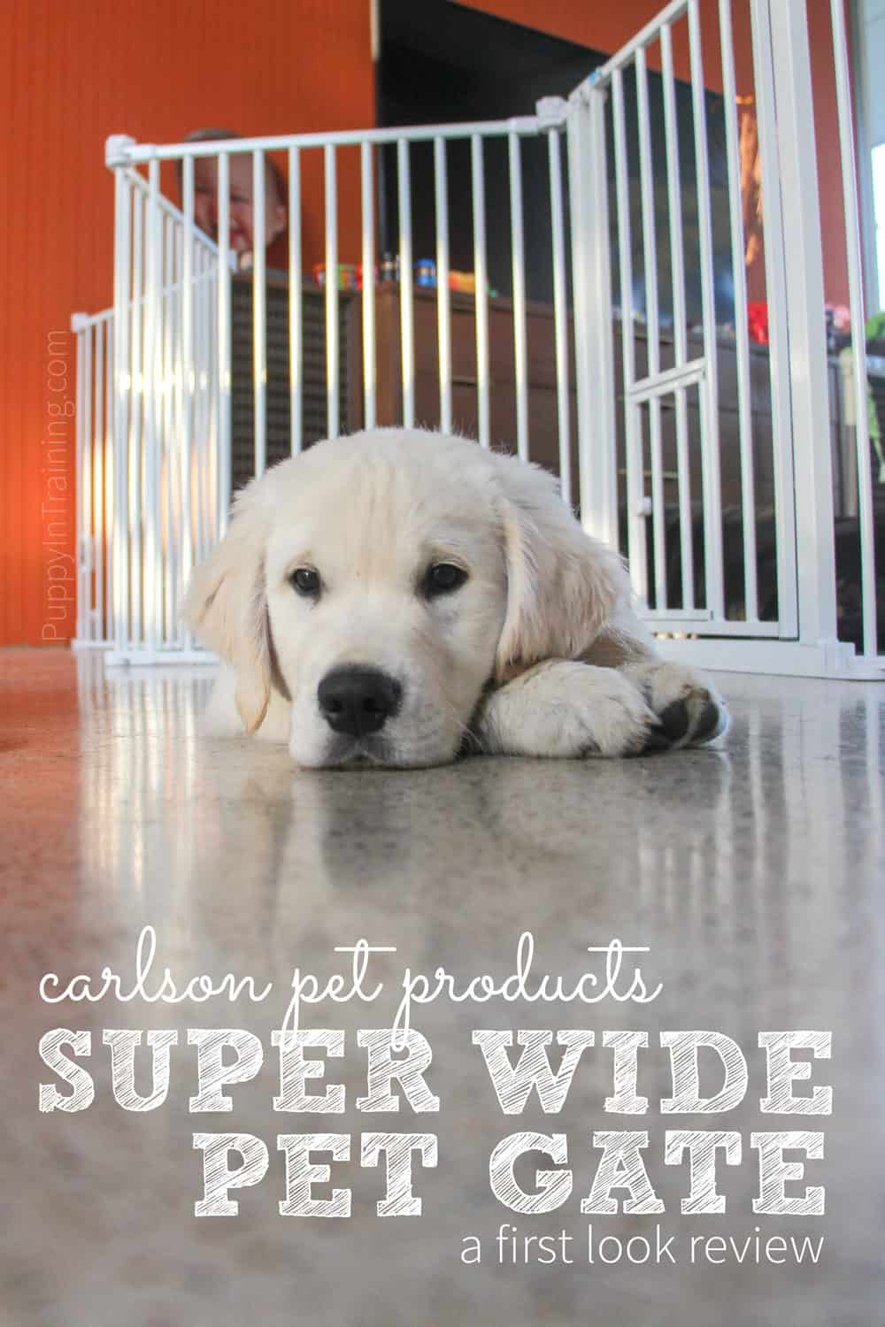 Our first look at the Carlson Super Wide Pet Gate with our Golden Retriever puppy, Charlie.