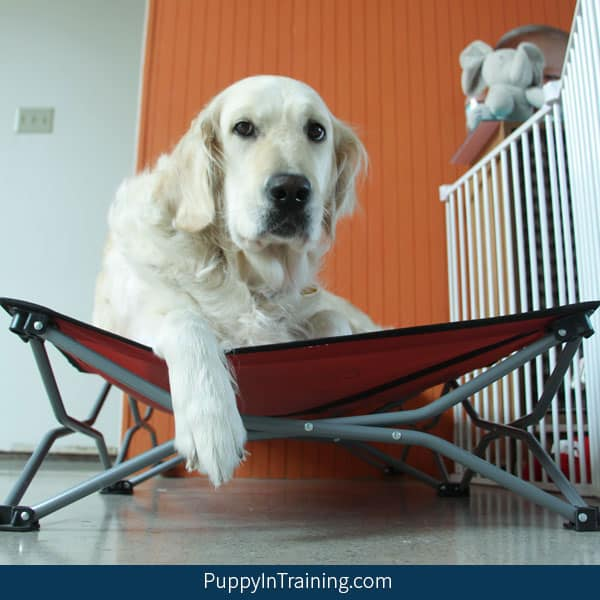 """How To Teach Your Dog """"Go To Your Bed"""""""