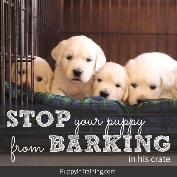 How to stop your puppy from barking in his crate.