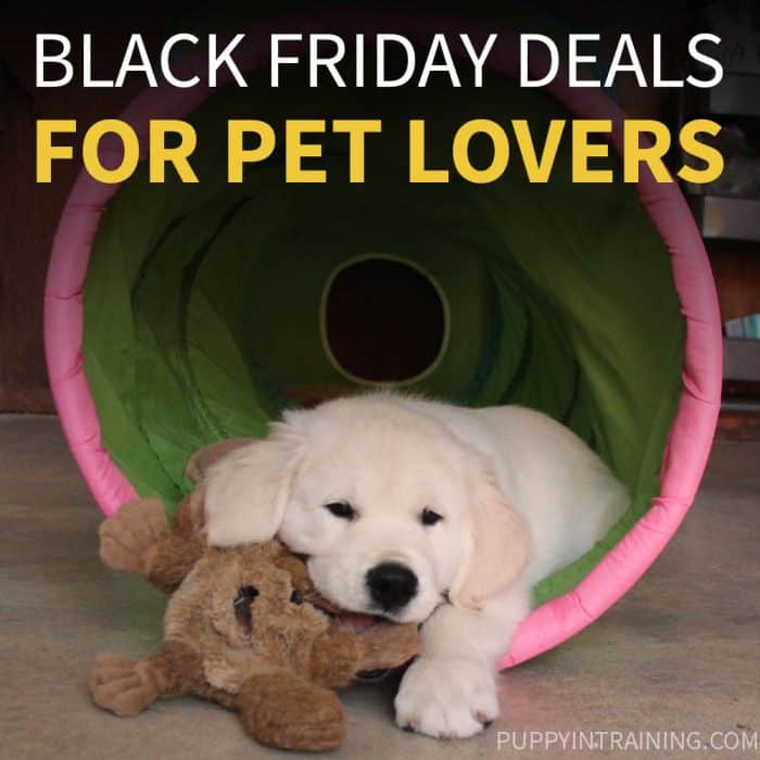 Black Friday Deals - Pets - Our favorite Black Friday and Cyber Monday deals for pets - Golden Retriever puppy sitting in his toy tunnel chewing on plush doggy toy.