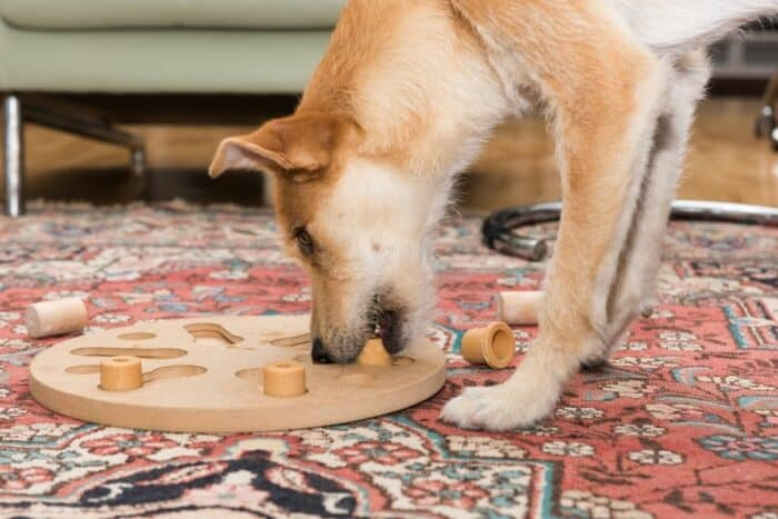 Cool Dog Games - dog playing with puzzle toy