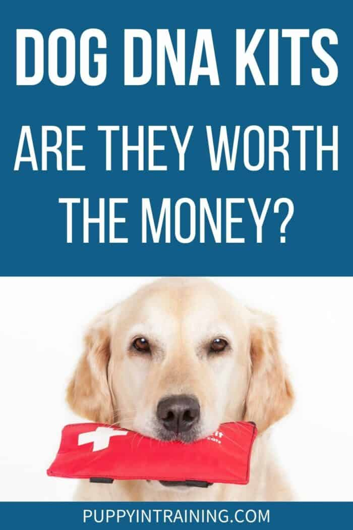 Dog DNA Kits - Are They Worth The Money? - Golden Retriever holding red pouch in his mouth.