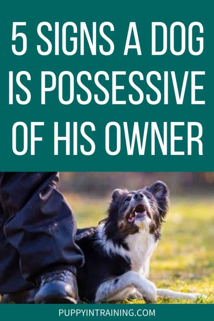 5 Signs A Dog Is Possessive Of His Owner - Dog in grass looking up at his owner