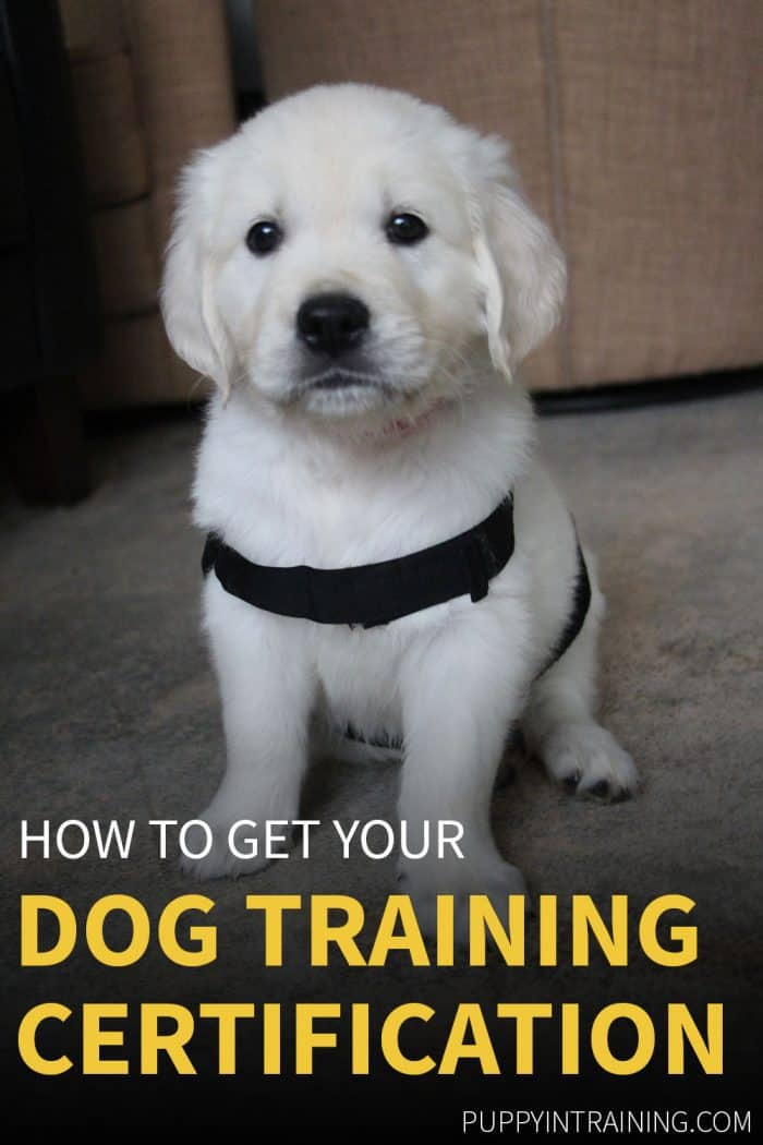 How to get your dog training certification. Puppy sitting obediently.