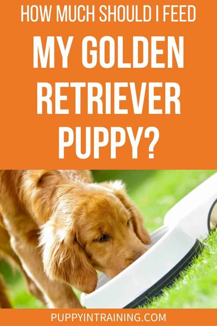 How Much Should I Feed My Golden Retriever Puppy? - Golden puppy eating out of a white bowl in the grass.