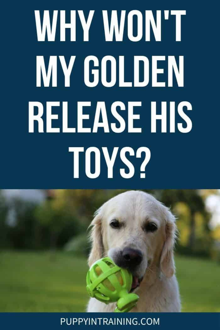 Golden Retriever holding green toy sitting on the grass