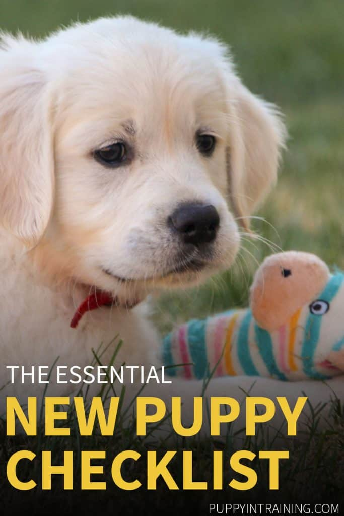 New Puppy Checklist - Golden Retriever puppy with his toy