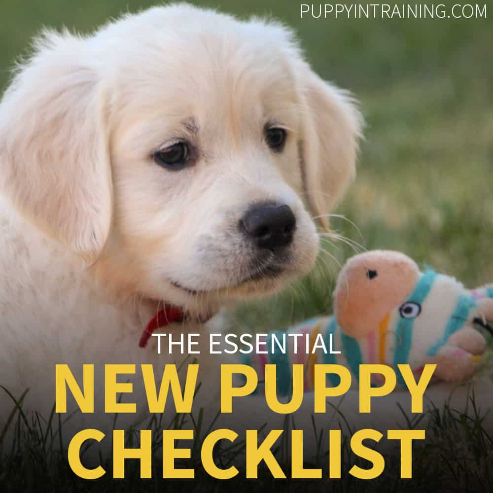 The Essential New Puppy Checklist - Puppy with his favorite toy
