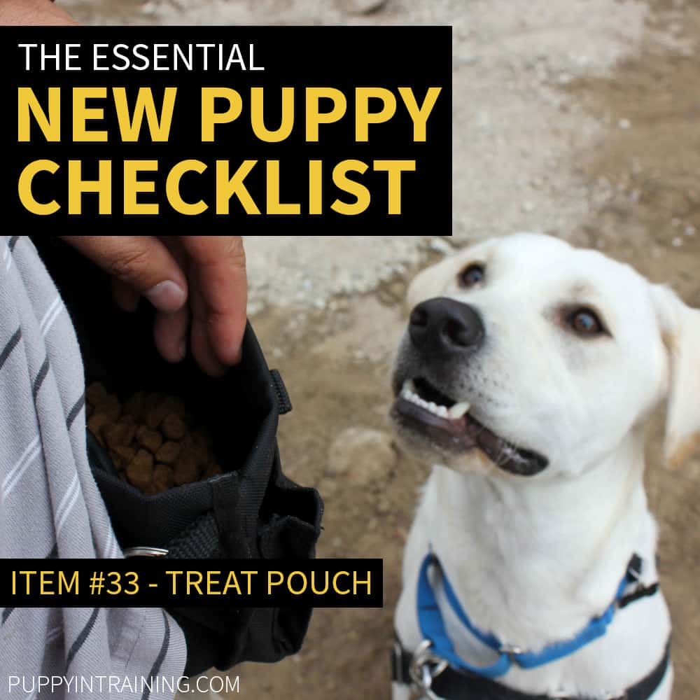 New Puppy Checklist - Item #33 - Treat Pouch - Lab waiting for treats