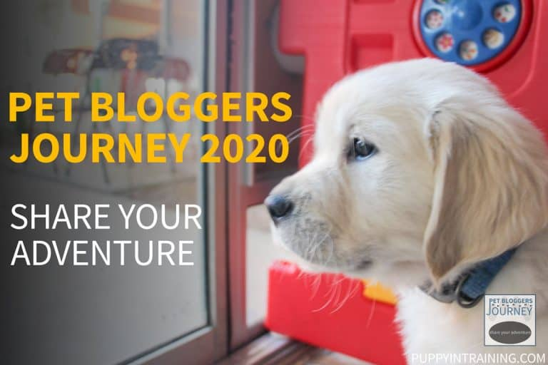 Pet Bloggers Journey 2020
