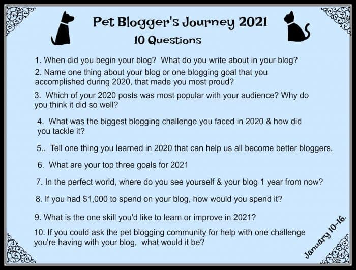 Pet Bloggers Journey 2021 Questions - Dog and Cat