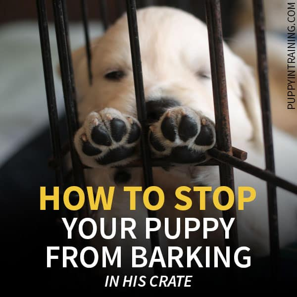 Puppy resting in his crate - how to stop a puppy from barking in his crate at night