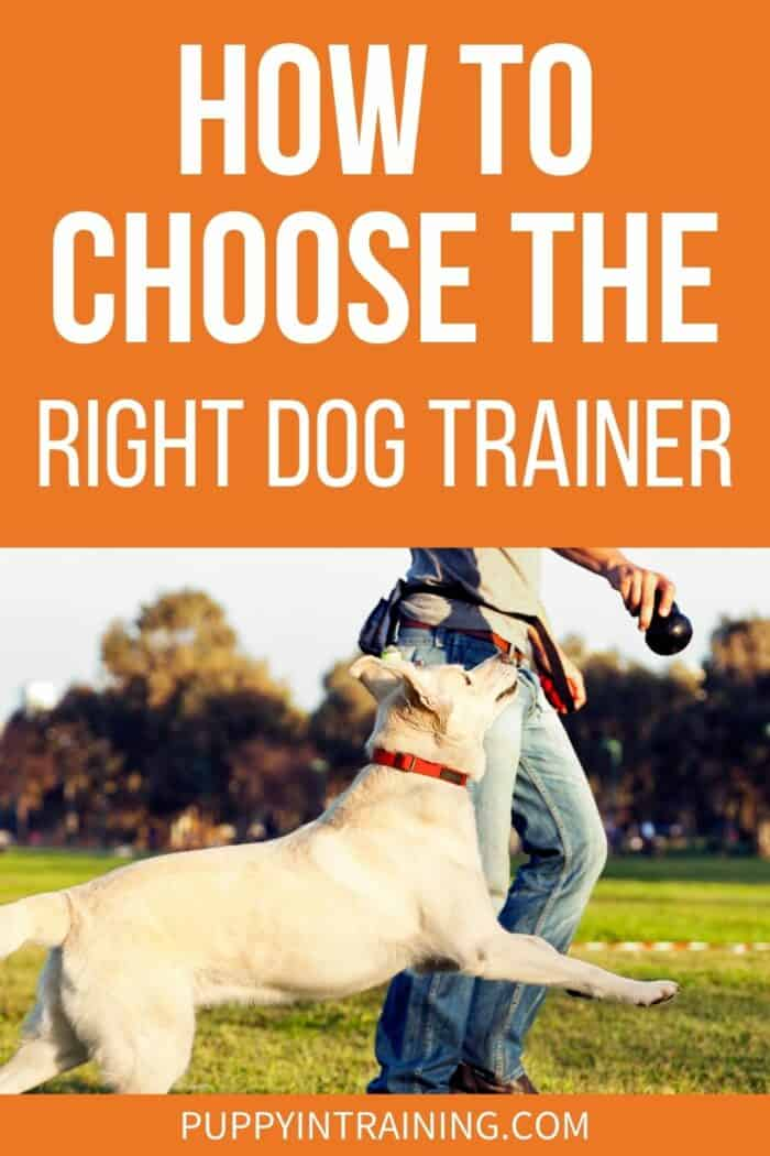 How To Choose The Right Dog Trainer - Yellow Lab with his dog trainer and KONG