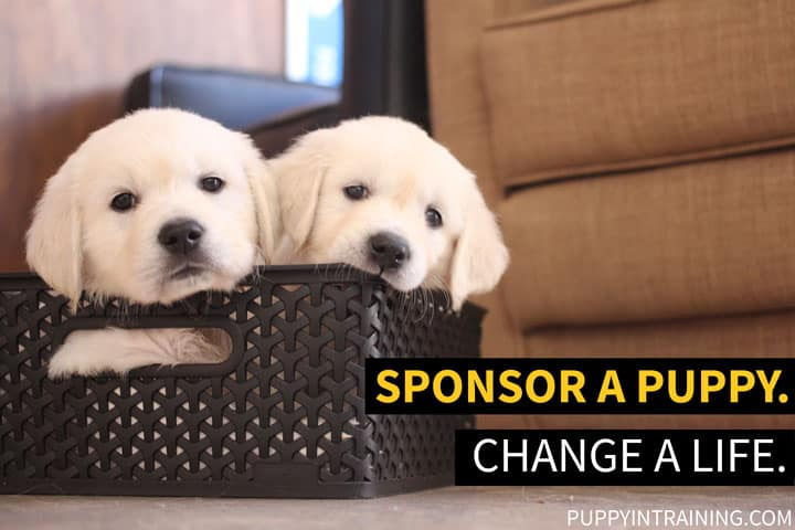 Sponsor A Puppy. Change A Life. Two Golden Retriever puppies sit in a basket.