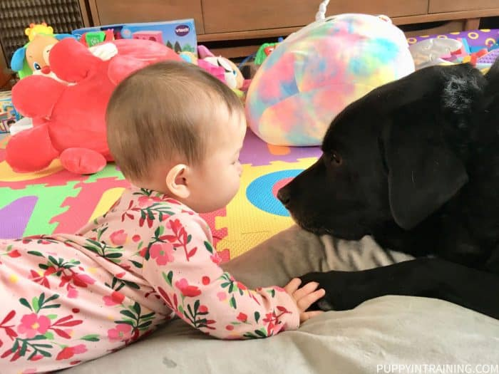 Baby KK and black Lab Stetson holding hands/paws