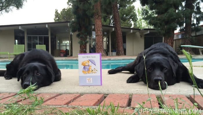 Two Black Dogs lying next to a Get Well Soon Card